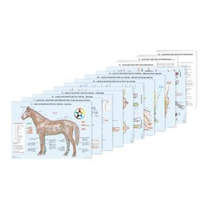 charte-cheval